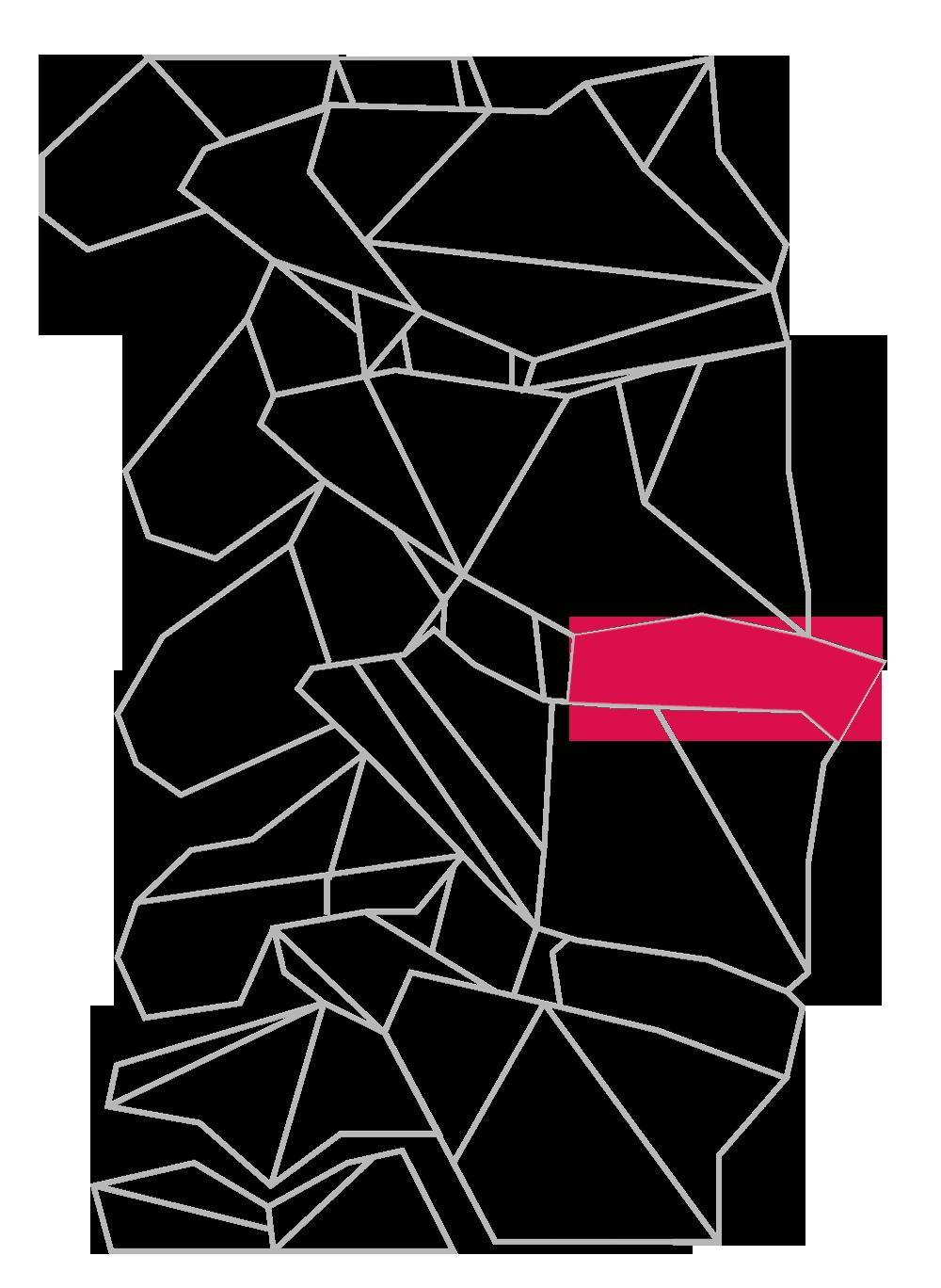 conceptual spine
