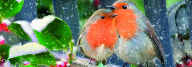 Robins on a bench