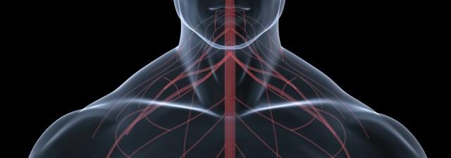 Human central nervous system